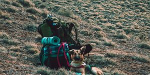 5 Dog Camping Tips - Perfect For the Avid Camper